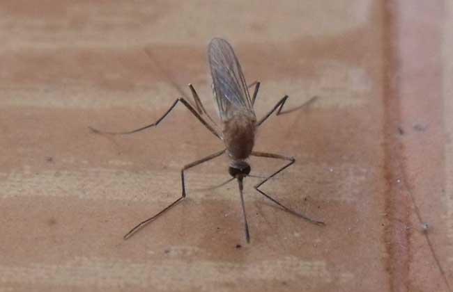 蚊子咬的红点怎么消