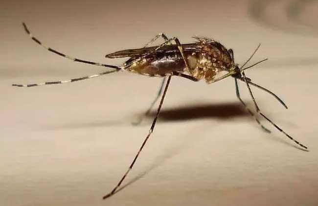 屋里有蚊子怎么办才好?