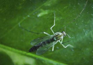 蚊子是怎么产生的?