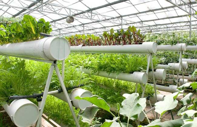 无土栽培蔬菜有哪些