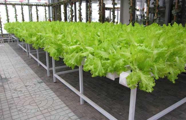 无土栽培有哪些优点