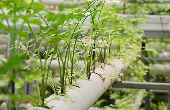 无土栽培蔬菜安全吗?