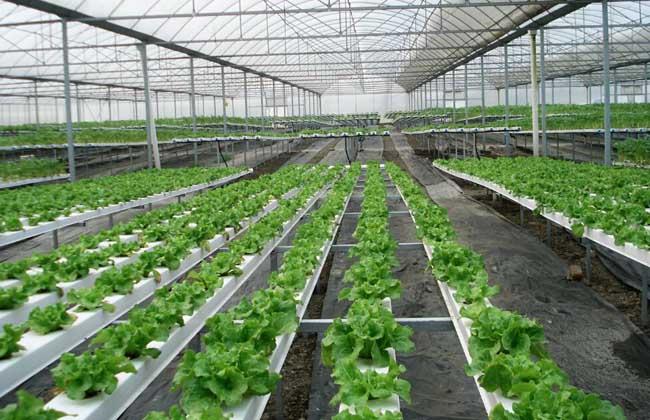 无土栽培一般投入多少钱?