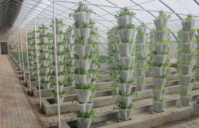 无土栽培投入多少