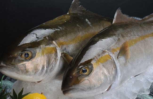 鲢鱼价格多少钱一斤?