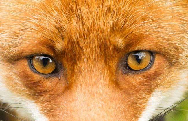狐狸眼是什么样的眼形?