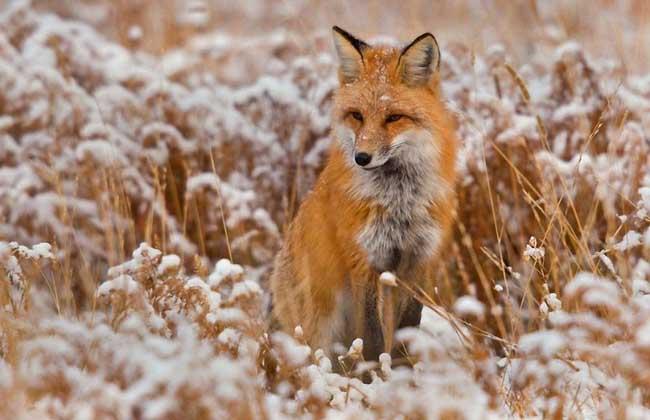 狐狸眼的女生面相如何?