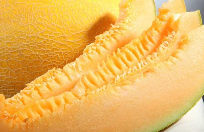 哈密瓜可以放冰箱吗