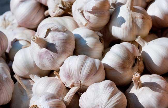 大蒜价格多少钱一斤?
