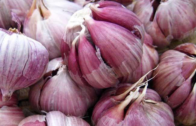 种植大蒜用什么肥料好?