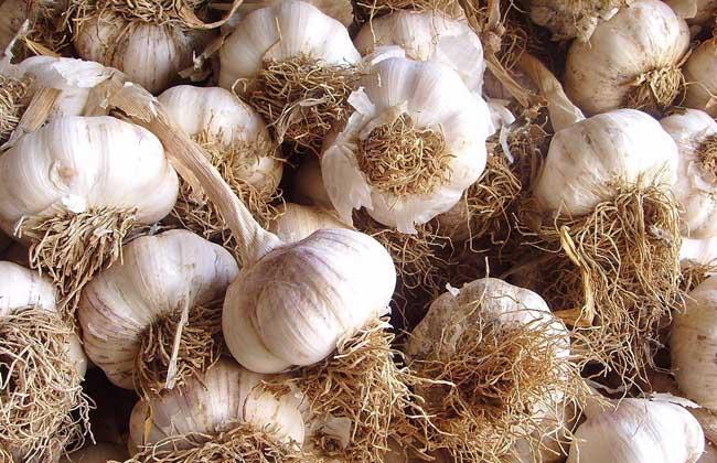种植大蒜用什么肥料好