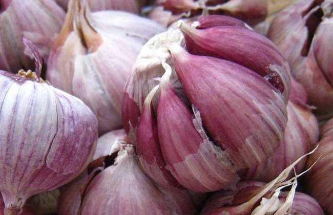 红皮大蒜与白皮大蒜的区别