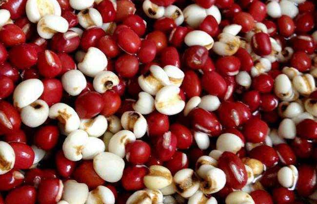 红豆和薏米有什么功效