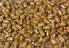 决明子种子价格及种植方法