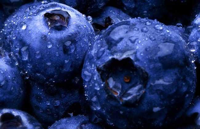 蓝莓每天吃多少合适?