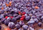 蓝莓干价格多少钱一斤?