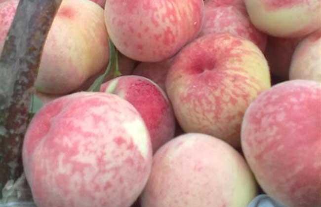 痛经能吃桃子吗