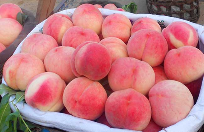 经期可以吃桃子吗