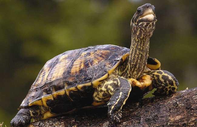 乌龟、王八、甲鱼、鳖的区别