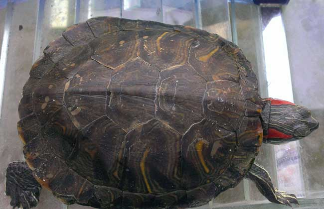 养乌龟有什么禁忌