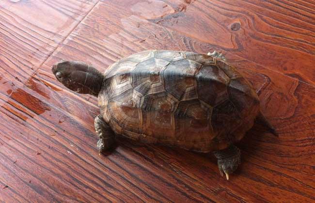 乌龟是招财的吗