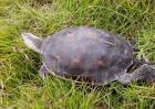 什么乌龟最好养又好看?