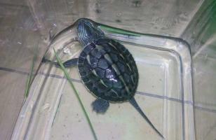乌龟真的是招财的吗?