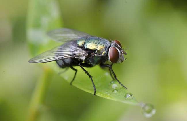 家里苍蝇多怎么办才好?