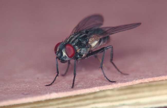 家里苍蝇多怎么办