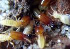 上门灭白蚁要多少钱?