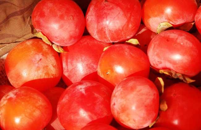 柿子的功效与作用及禁忌