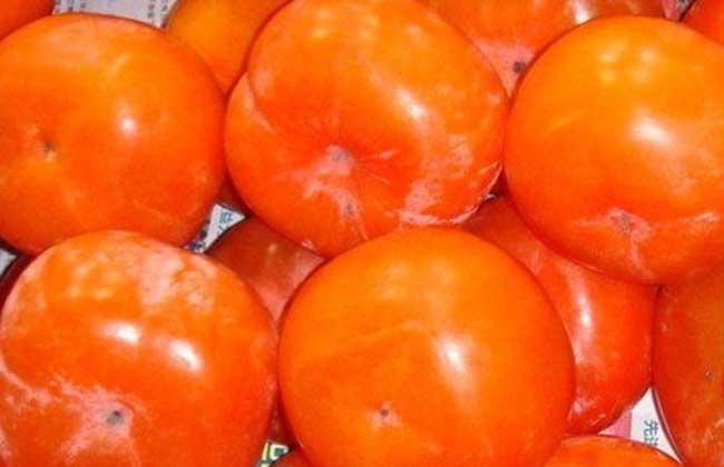 柿子的功效与作用