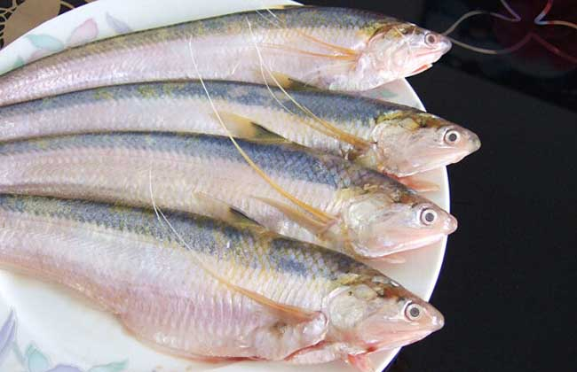 长江刀鱼价格多少钱一斤?