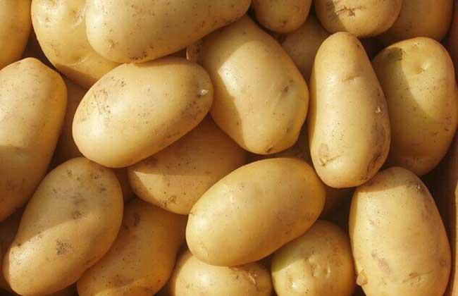 土豆种子价格及种植方法