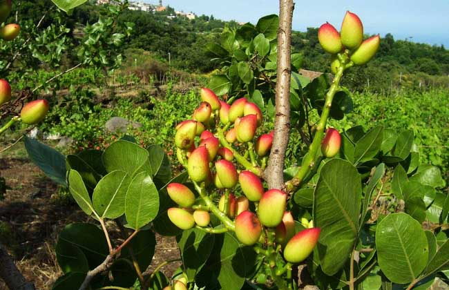 现货交易所:大同市云冈区科协开展果树种植管理