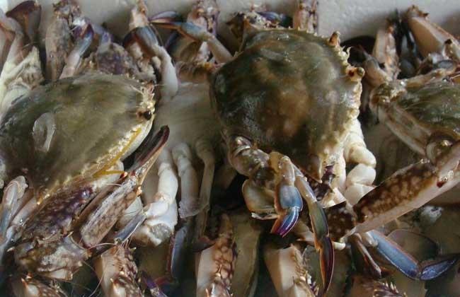 梭子蟹什么时候最肥?