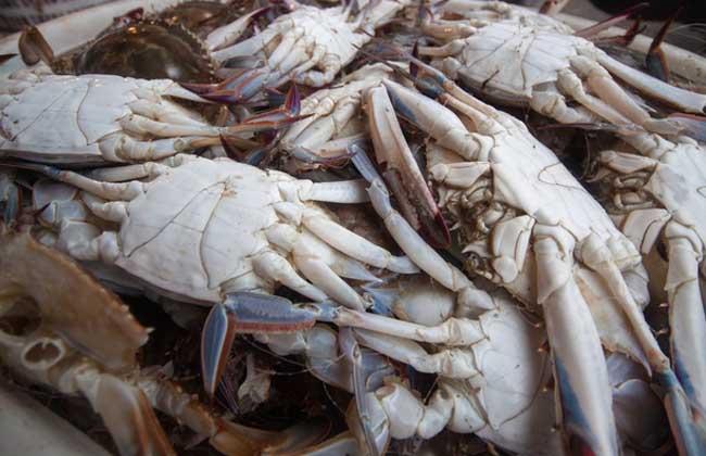 梭子蟹公母哪个好吃?