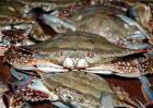 冰冻梭子蟹能吃吗?