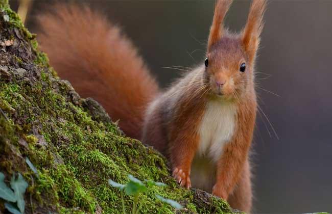 松鼠是保护动物吗?
