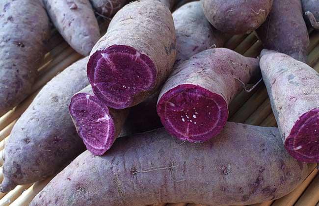 紫薯发芽了还能吃吗?