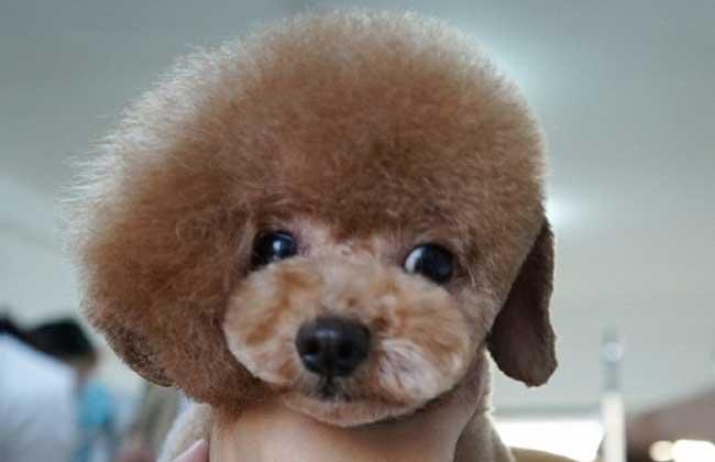 宠物美容师
