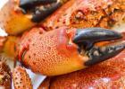 螃蟹和大闸蟹的区别