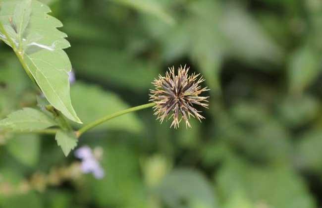 植物传播种子有哪些方法?