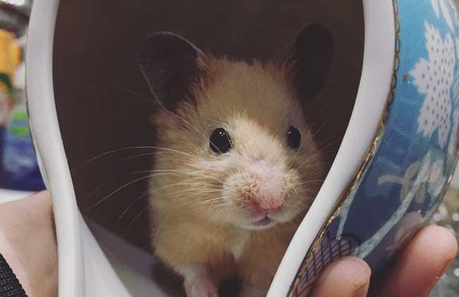 仓鼠怎么养不容易死
