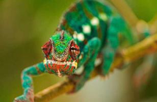 变色龙能变几种颜色?