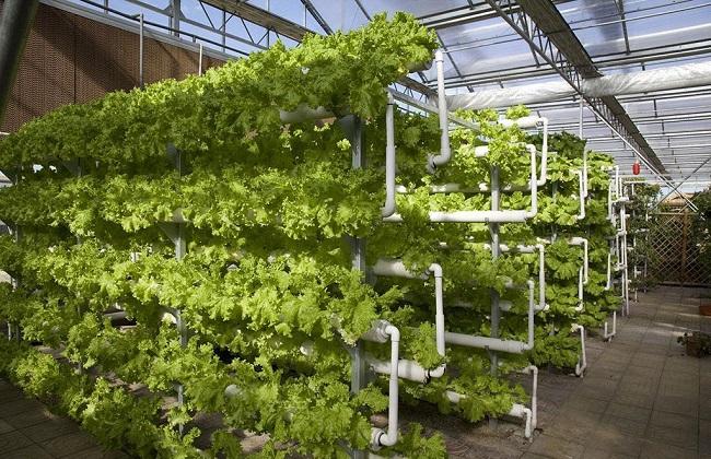 温室蔬菜2
