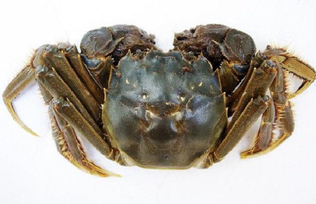 最深度解析河蟹脱壳全过程