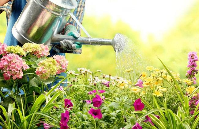 怎么正确的给花浇水