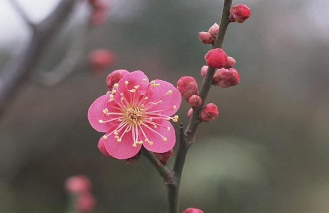 元旦开花的花卉有哪些