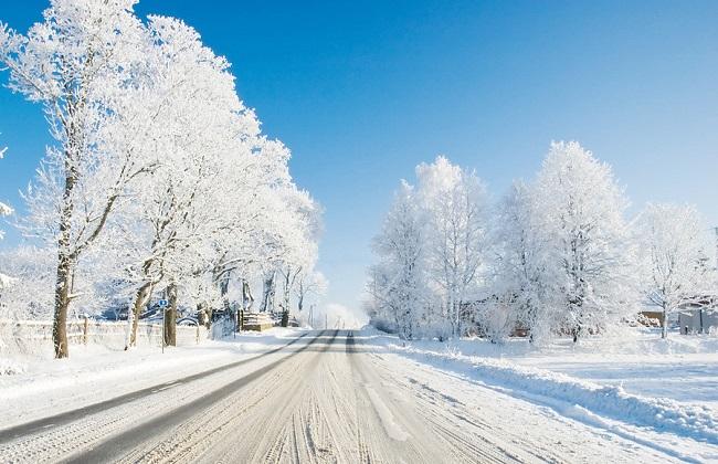 虞美人冬季养护方法
